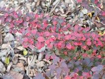 Растительность падения Стоковая Фотография RF