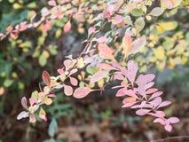 Растительность падения Стоковые Изображения RF