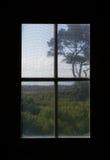 Растительность дюны Каролины осмотренная через окно экрана Стоковая Фотография