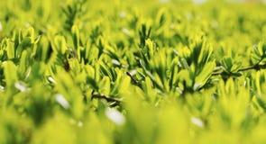 Растительность Стоковая Фотография