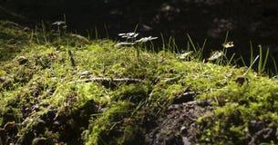Растительность nighttime Стоковое Изображение