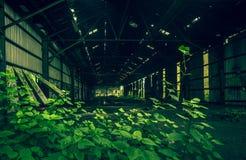 Растительность Urbex стоковая фотография rf