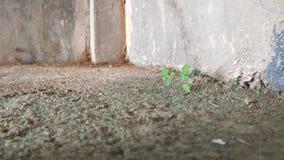 Расти вверх крепко стоковое изображение rf