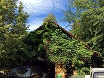Расти-в доме с оранжевыми цветками Стоковые Изображения