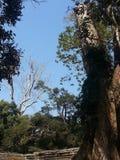 Расти деревьев Стоковая Фотография RF