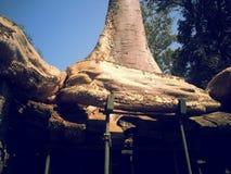 Расти деревьев Стоковое Изображение