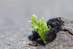 Расти зеленого растения Стоковое фото RF