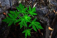 Расти зеленого растения Стоковое Изображение RF