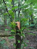Расти отрезанный вниз с ствола дерева Стоковые Фото