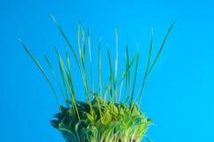 расти травы Стоковые Фото
