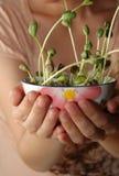 расти фасолей Стоковое Фото