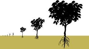 расти Стоковое Изображение