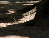 расти Стоковое Изображение RF
