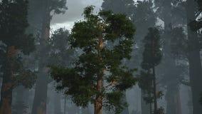 Расти Redwood иллюстрация вектора