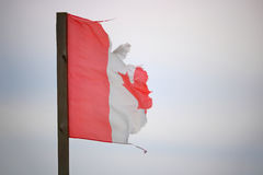 Растрепанный и сорванный канадский флаг Стоковое Фото