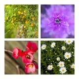 растущая весна Стоковое фото RF