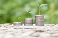 Растущая концепция денег может использовать для монтажа вашу концепцию дела успеха Стоковые Фото