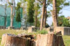 Растущая трава от мертвого дерева Стоковые Изображения