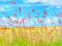 Растущая трава стоковое фото rf