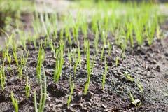 Растущая трава Стоковое Фото