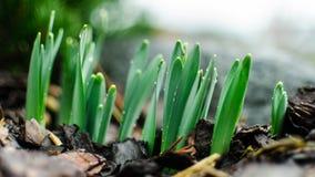 Растущая трава Стоковая Фотография