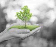 Растущее зеленое дерево в руках на черно-белом backgr дерева bokeh Стоковое Фото