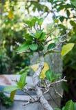 Растущее зеленое растение Стоковые Фотографии RF