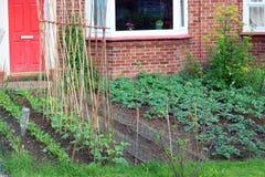 Растущее овощей в дворе перед входом или саде Стоковая Фотография