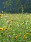 Растущее полевых цветков на речном береге Стоковое Изображение