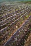 Растущее поле - изображение запаса Стоковые Изображения RF