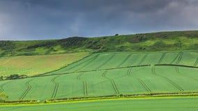 Растущее урожаев в полях Стоковая Фотография