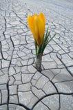 Растущее цветка в непроизводительной земле стоковое изображение