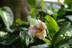 Растущее цветка в саде Стоковое Изображение
