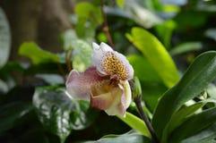 Растущее цветка в саде Стоковые Изображения