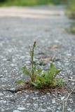 Растущее цветка на великолепной улице Стоковое Изображение RF