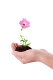растущее цветка Стоковое фото RF