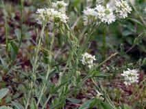 Растущее цветков на реке Стоковые Фото