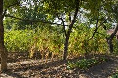 Растущие био овощи Стоковая Фотография RF