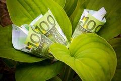 Растущие евро Селективный фокус Стоковое Изображение RF