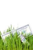 Растущие деньги в траве Стоковое фото RF