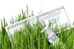 Растущие деньги в траве Стоковые Изображения RF