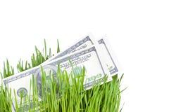 Растущие деньги в траве Стоковое Изображение