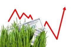 Растущие деньги в траве Стоковое Изображение RF