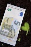 растущие деньги Стоковые Фото