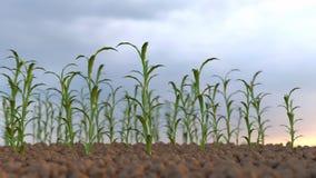 Растущие заводы на поле Стоковые Фотографии RF