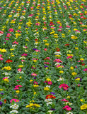 растущие заводы питомника Стоковое фото RF
