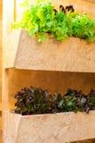 Растущие овощи в баках висят на стенах | Органический здоровый пищевой ингредиент | Фотоснимок еды Стоковая Фотография