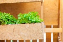Растущие овощи в баках висят на стенах | Органический здоровый пищевой ингредиент | Фотоснимок еды Стоковые Фото