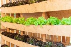 Растущие овощи в баках висят на стенах | Органический здоровый пищевой ингредиент | Фотоснимок еды Стоковое Изображение RF