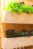Растущие овощи в баках висят на стенах | Органический здоровый пищевой ингредиент | Фотоснимок еды Стоковое фото RF